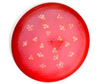 Ecola GX53   LED color  8,0W Tablet 220V Red Красный матовое стекло (композит) 28x74 - Олимп-Зеленоград